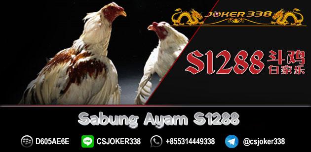 Sabung Ayam S12888